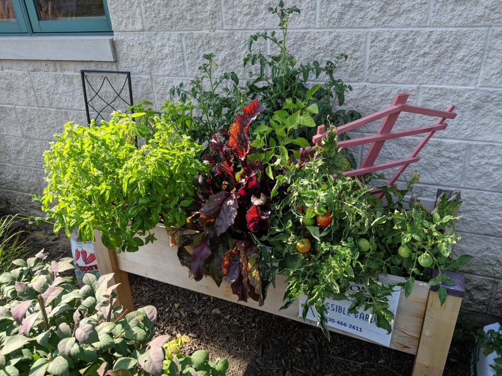 Raised garden with vegetables and herbs