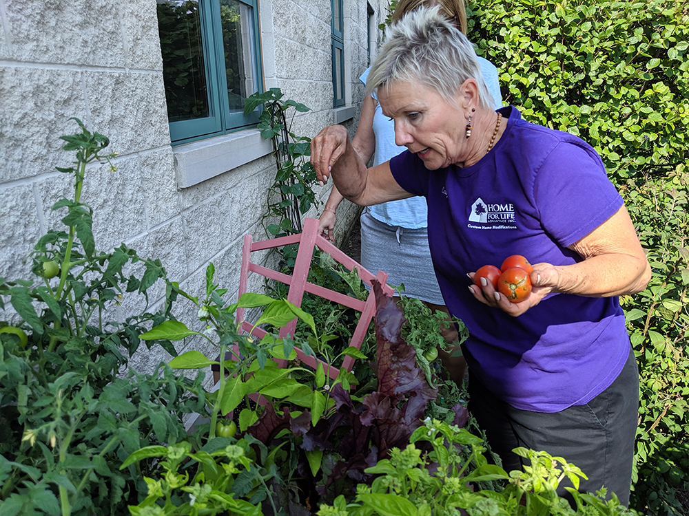 Cindy Shaw looking for tomatoes in the Home For Life Advantage raised garden